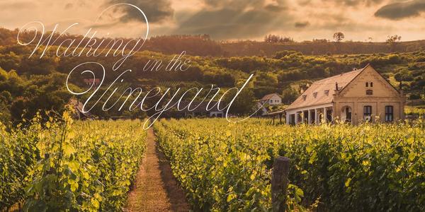 Small_vineyard@2x