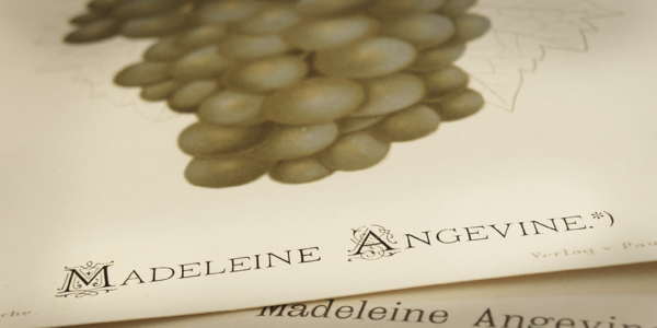 Small_ivory_-_a_decorative_serif_with_layering_options-05@2x